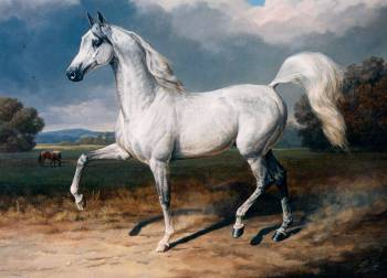 Portrait of a stallion Emanor, US National Champion - Andrzej Novak-Zemplinski