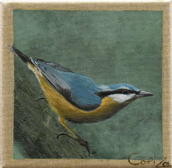 There is such a bird: Nuthatch - Izabela Dąbrowska