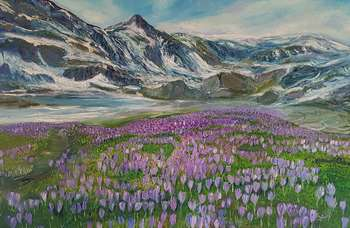Crocuses in the mountains - Jadwiga Rudnicka