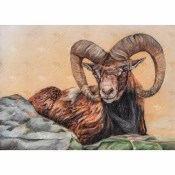 Mouflon On The Rock - Jowita Szmigiero