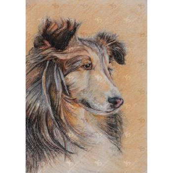 Smiling Collie - Jowita Szmigiero