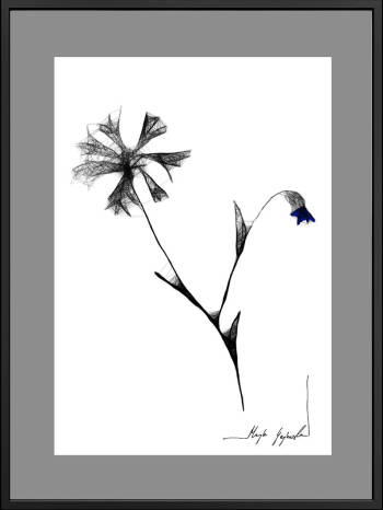 Graphic work 126 - cornflowers - Maja Gajewska