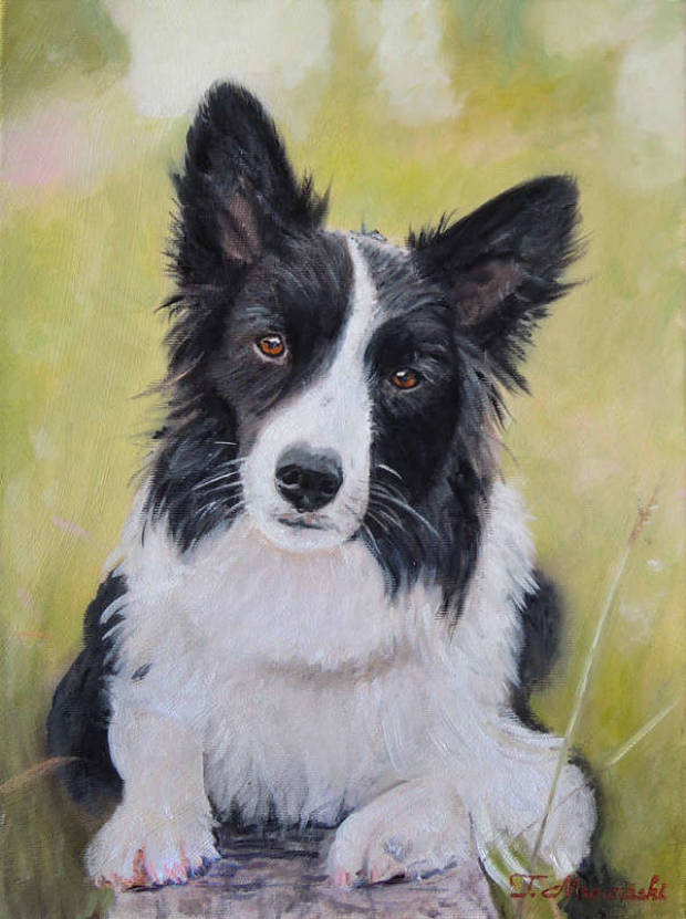 Border-Collie-Hund Tomasz Mrowiński